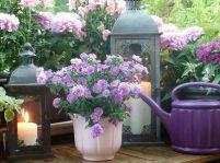 Izbové rastliny, ktoré vám zlepšia náladu