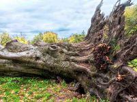 Korene úsmevu v strome života