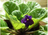 Hnojenie izbových rastlín