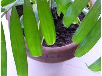 4 izbové rastliny, ktoré prežijú aj pri neskúsenom pestovateľovi