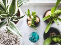 6 dôvodov, prečo svoj byt zaplniť izbovými rastlinami