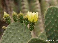 Viete sa správne starať o kaktusy?