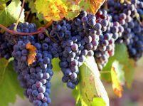 Výlety za vôňou a chuťou medoviny a vína