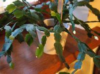 Kvety v kanceláriách