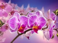 Chcete, aby orchidea kvitla? Takto sa o ňu starajte!