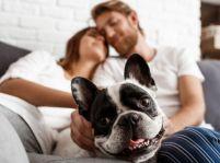 Ako si zvyknúť na domáceho miláčika vášho partnera