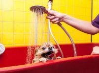 Doprajte svojmu psíkovi pohodlie v kúpeľni