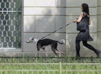 Vodítko pre psa plní dôležitú úlohu vo výchove vášho štvornohého miláčika