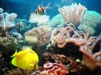 Akvárium - okno do sveta ticha