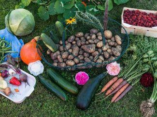 9 druhov jesenného ovocia a zeleniny a ich pozitíva