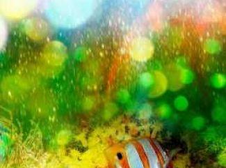 Neónové rybičky