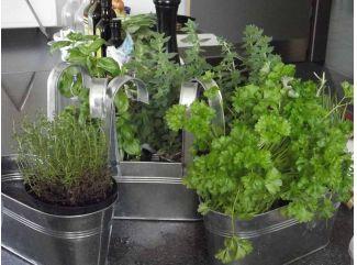 Najčastejšie používané bylinky v kuchyni