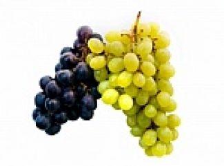 Hrozno - vinič hroznorodý