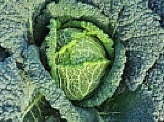 Jemná kelová polievka