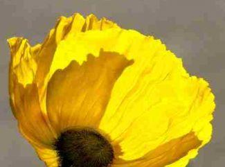 Čo symbolizujú jednotlivé kvety ?  (1. časť)