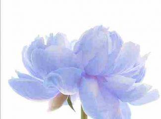 Čo symbolizujú jednotlivé kvety ?  (2. časť)