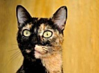 Zrak mačky