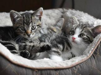 Obstarávate si do bytu mačku? Prečítajte si, aká výbava by vám nemala chýbať