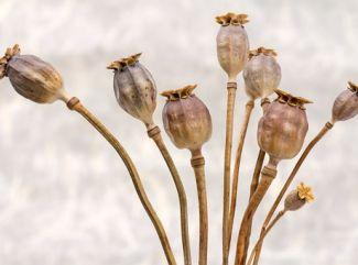 Makové guľôčky proti anémii a stresu