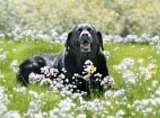 Starostlivosť o staršie psy