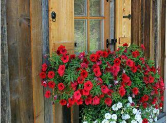 Ako sa správne starať o záhradku cez letné obdobie?