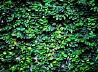 Popinavé rastliny