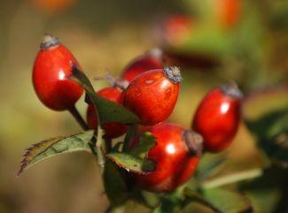 September je stvorený na zber byliniek. Ktoré si nasušiť na zimu?