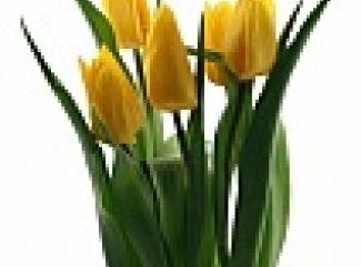 Žena a kvet