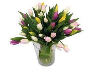 Dostali ste k sviatku tulipány?