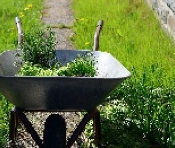 Týchto 9 liečivých rastlín môžete zbierať už od júna