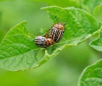 Takto sa zbavíte škodcov vo vašej záhrade