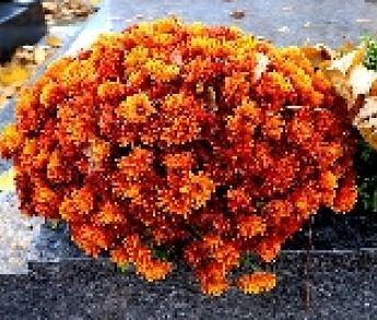 Čím ozdobiť hrob namiesto umelých kvetov a vencov?