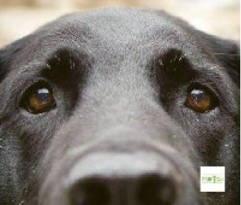 Pes je láska. Kniha o tom, prečo nás psy tak milujú