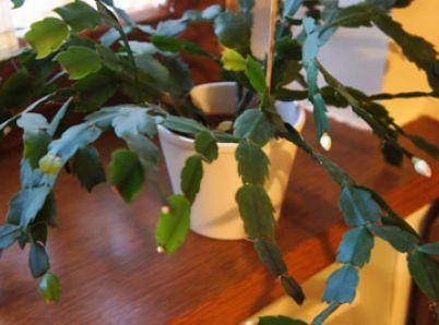 Zeleň v domácnosti – Na čo si dávať pozor, aby vynikala v najkrajšom svetle!