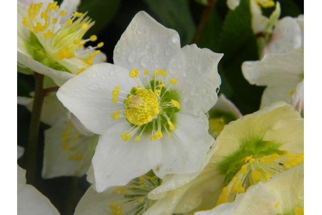 Kvety pre sviatočné chvíle