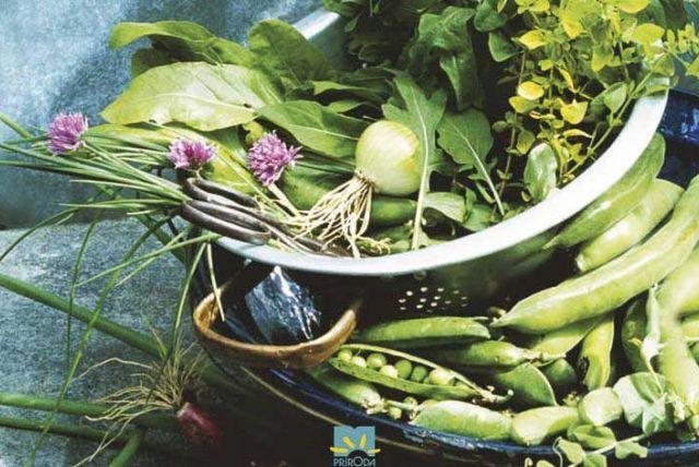 Užitočné tipy a rady do biozáhrady