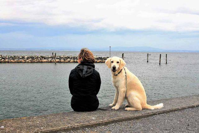 Koľko pohybu potrebuje váš pes denne?
