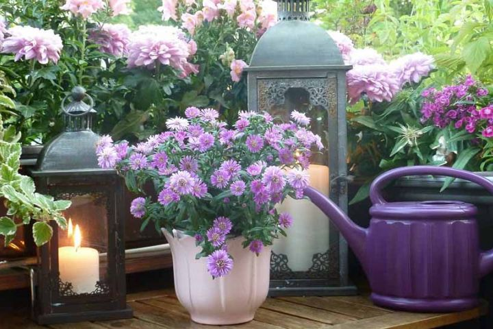 Balkón ako vaša vlastná oáza zelene. Poradíme vám, ako ju vytvoriť