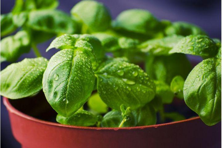 3 bylinky z kvetináča, ktoré skvelo dochutia jedlo a pomôžu pri zdravotných problémoch