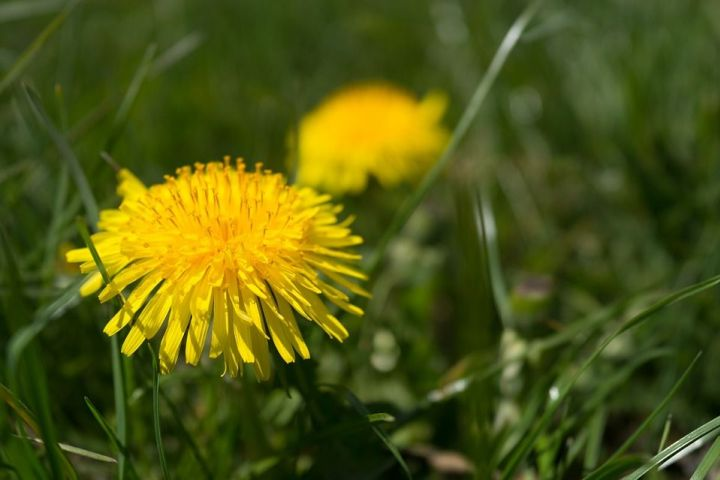 Jarné bylinky, ktoré si musíte nazbierať!