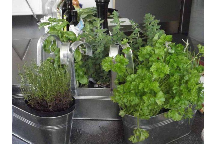 Ako používať bylinky v kuchyni