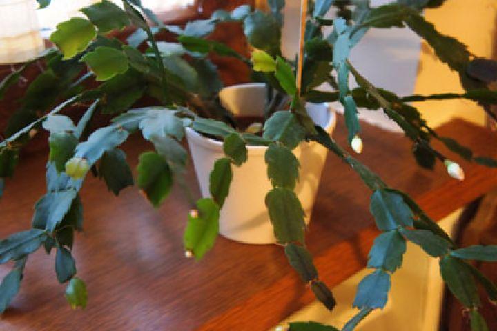 Kaktusy a sukulenty – exotika u vás doma