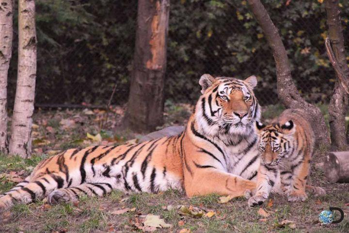 10 věcí, které možná nevíte o tygrech