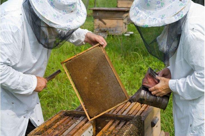 Apiterapia. Včely ako prírodný liečiteľ