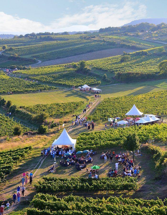 Dolnorakúske  podujatie  Pôžitkárska  míľa  aj  tento  rok  prinesie  to  najlepšie  z  vinárskych  pivníc  našich  susedov